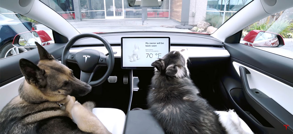 Tesla 'Dog Mode' keeps pets safe when owner is away